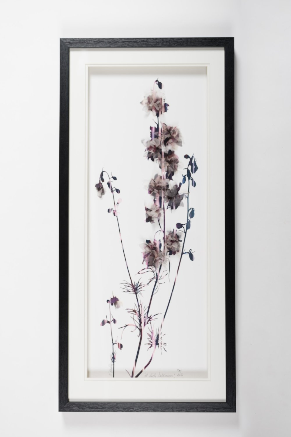 'A Pretty Delphinium' (33x73cm) £320.00. Visit the  shop  on our website to purchase.