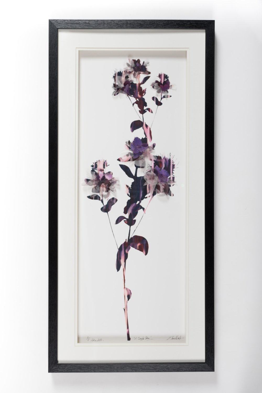 'A Single Stem' (33 x73cm)£320.00. Visit the  shop  on our website to purchase.