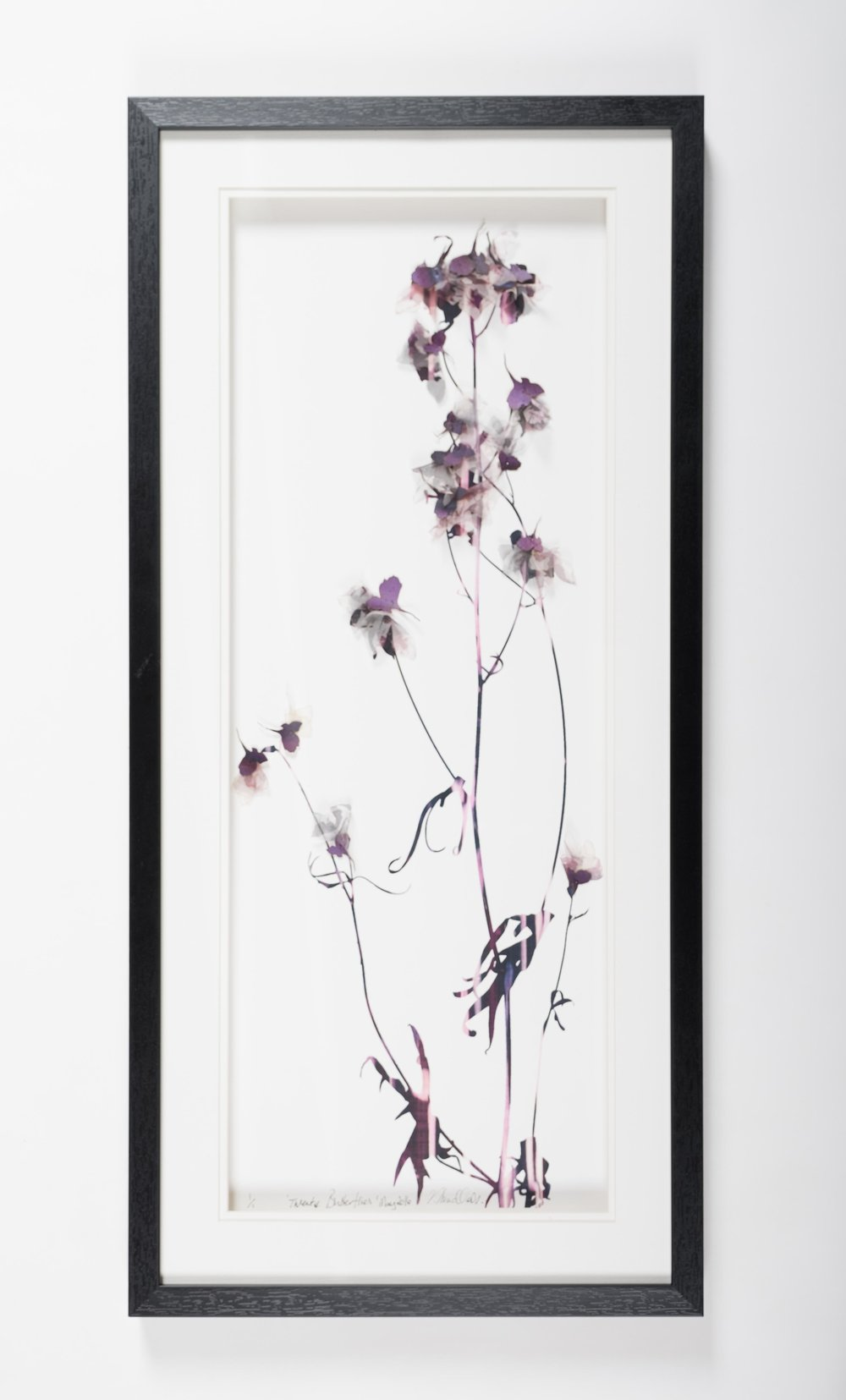 'Twenty Butterflies' (33x73cm)£320.00. Visit the  shop  on our website to purchase.