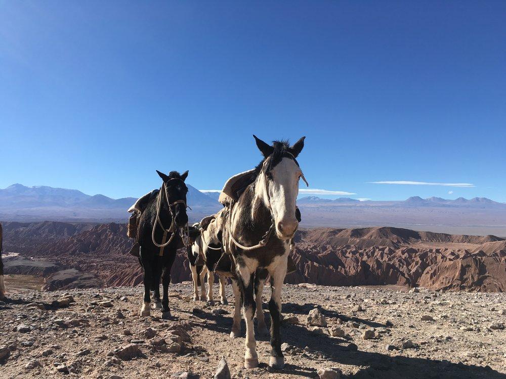 horseback riding above Valle de la Muerte