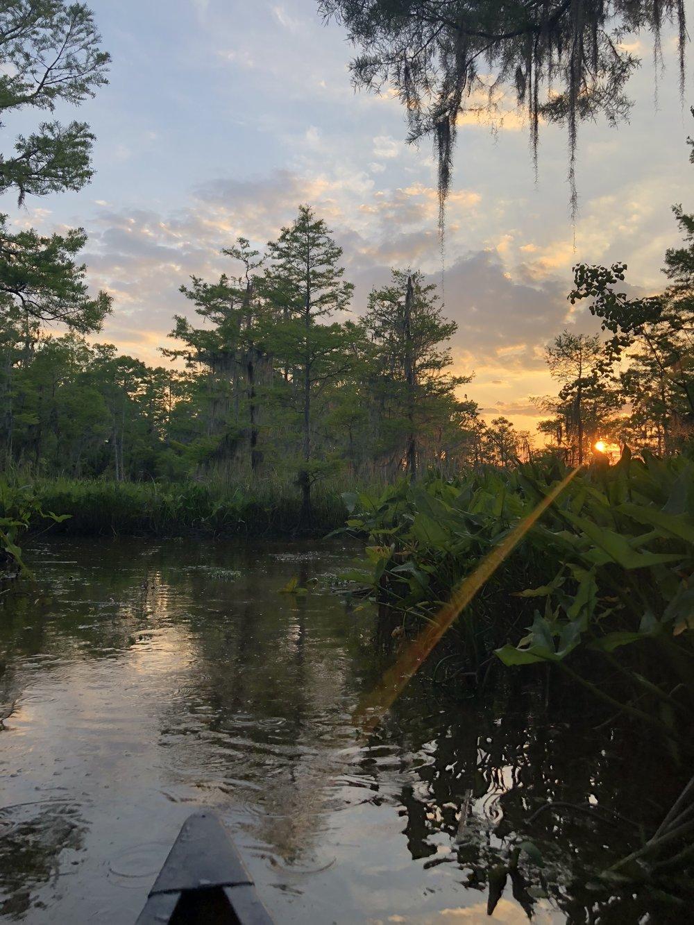 Manchac Swamp at sunset