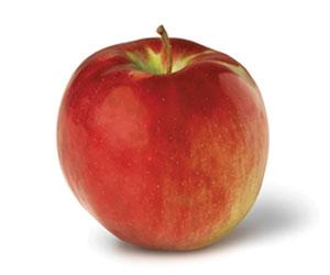 Apple-Cortland.jpg