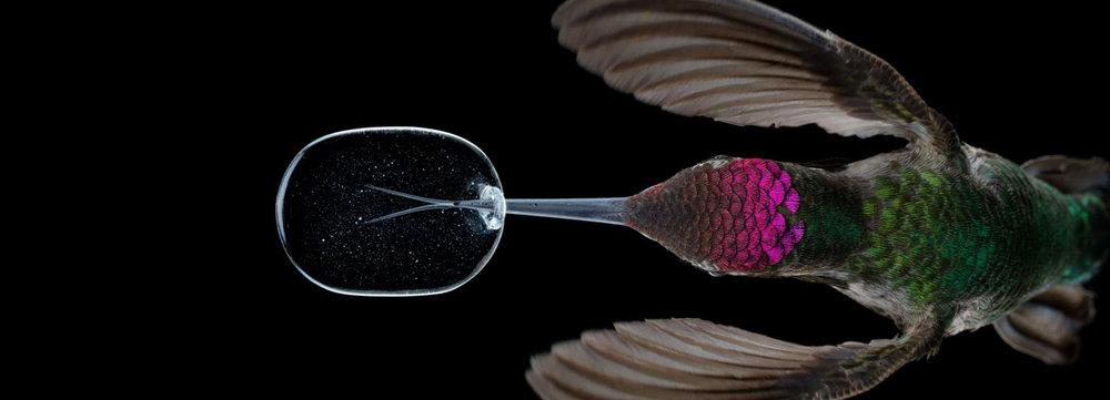 anand-varma-slo-mo-videos-hummingbirds-designboom-1800.jpg