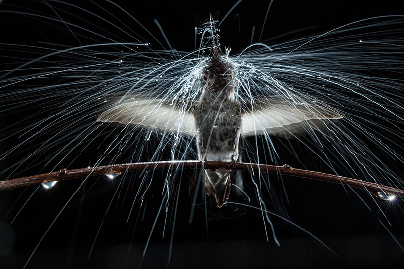 anand-varma-slo-mo-videos-hummingbirds-designboom-001.jpg