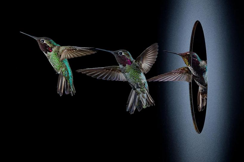 anand-varma-slo-mo-videos-hummingbirds-designboom-002.jpg