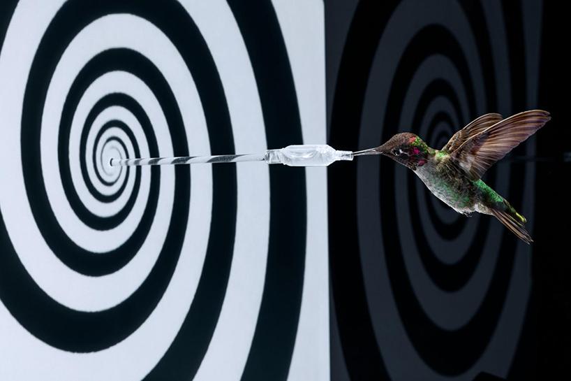 anand-varma-slo-mo-videos-hummingbirds-designboom-004.jpg