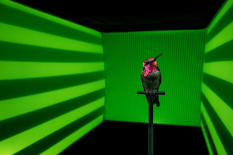 anand-varma-slo-mo-videos-hummingbirds-designboom-006.jpg