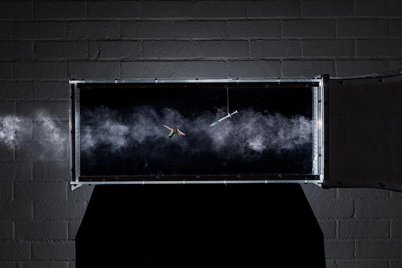anand-varma-slo-mo-videos-hummingbirds-designboom-007.jpg