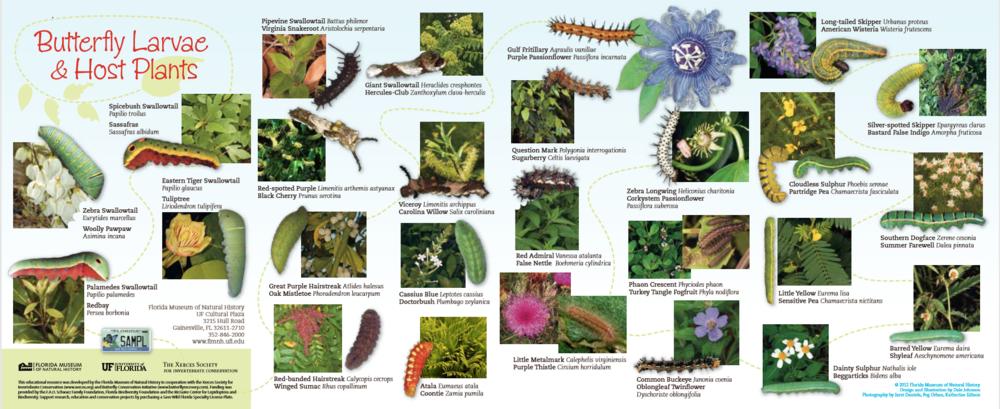 Monarch Butterflies pg 2.PNG