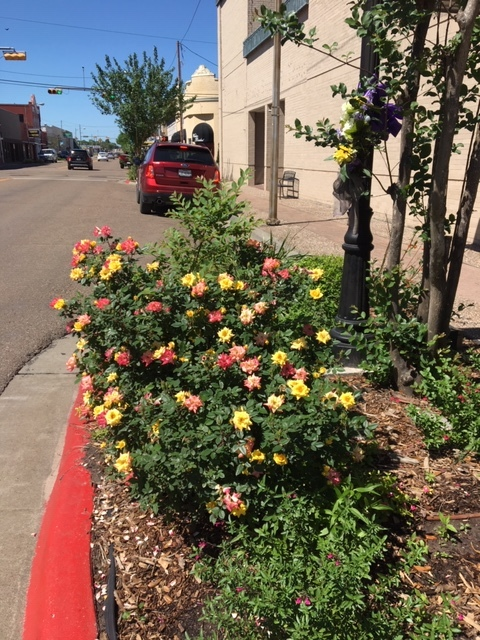Downtown Flowers 2018 2 Bee City USA.jpeg