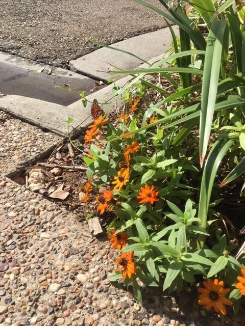 Downtown Flowers 2018 Bee City USA.jpeg