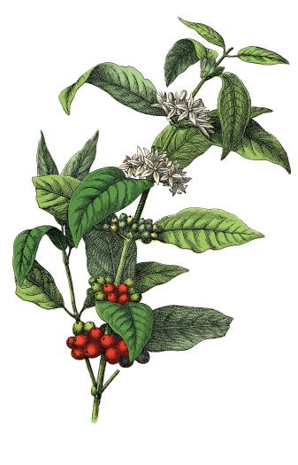 SCAA-Global-Coffee-Expo-Illustration.jpg