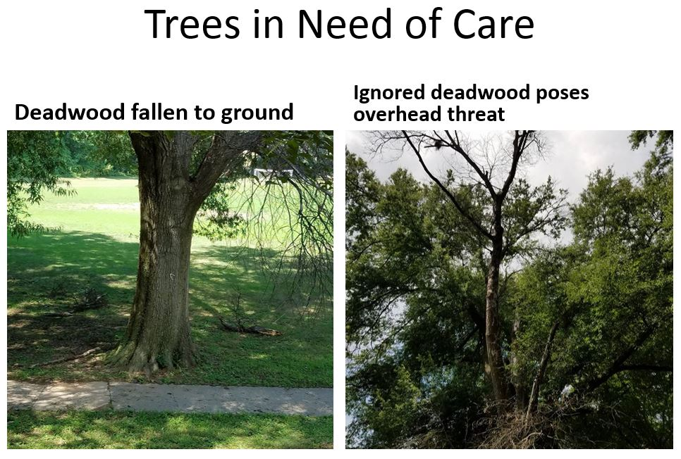 Trees Need Care.JPG