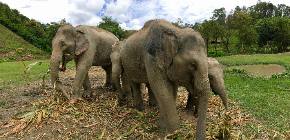 Elephant Nature Park outside Chiang Mai