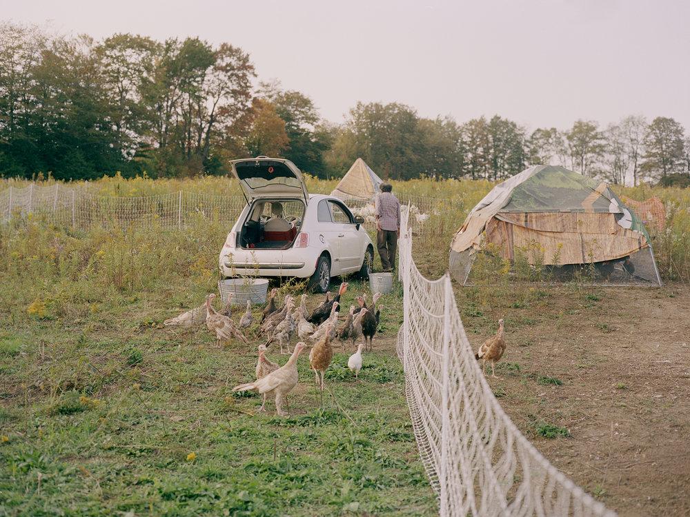 Marin_Chickens_ 010.jpg