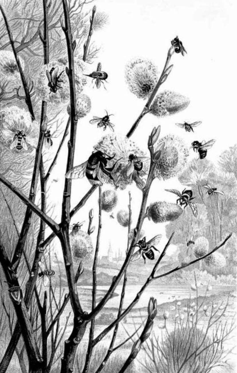 Bees, flies, and flowers. Alfred Edmund Brehm, 1883-1884.