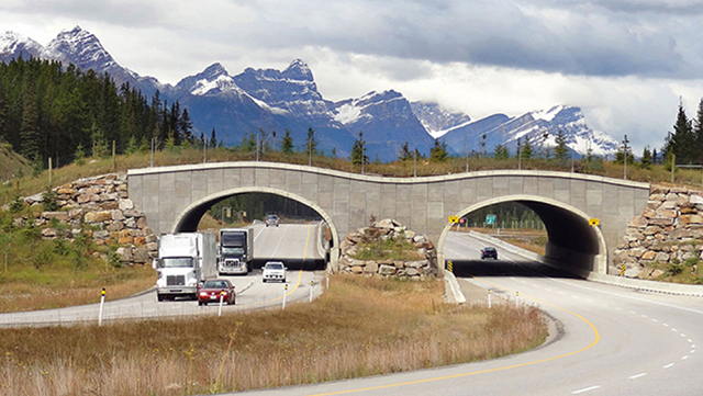 A wildlife bridge helps critters safely cross the TransCanada Highway near Banff so that their habitats are connected. E.O. Wilson calls for an extensive, connected network of ecosystems to be reserved for nature in North America. Credit: WikiPedant/Wikimedia Commons.
