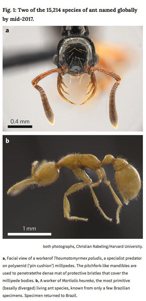nature-ants-ss.jpg
