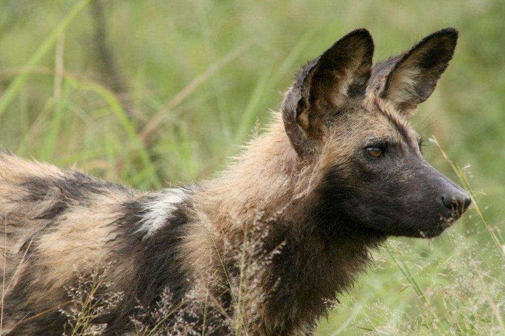 Photo courtesy of the Endangered Wildlife Trust