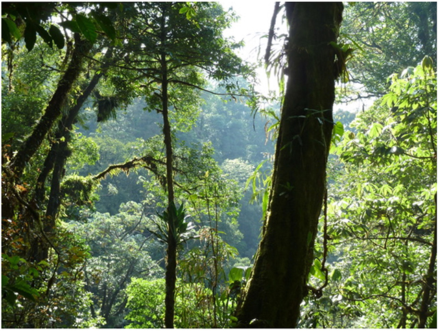 Ecuadorian cloud forest. Photo by Julie Hart.