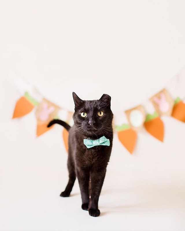 "Check out Odie sporting his @sweetpicklesdesigns bow tie for Easter 😻 We sent these with our April ""brunch"" kit... aren't they adorable?! 🐣 🐰 (📸 Photo by @bridgetreneemoore)"