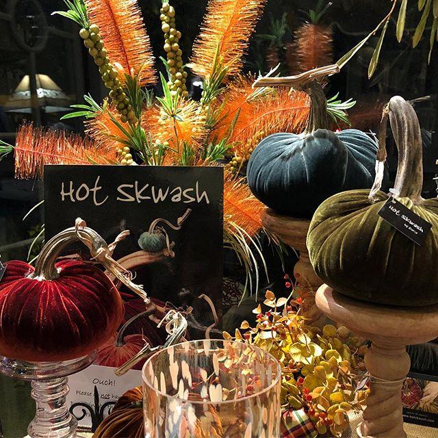 Pick a pumpkin to grace your Thanksgiving table... 🦃 #hotskwash #daisydigins #velvetpumpkins #holidaydecor #barringtonri