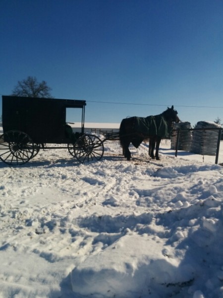 amish horses and soil