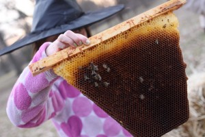 girl holding dead bee top bar frame