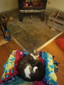 cats cuddled by woodstove