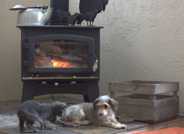 pets by woodstove