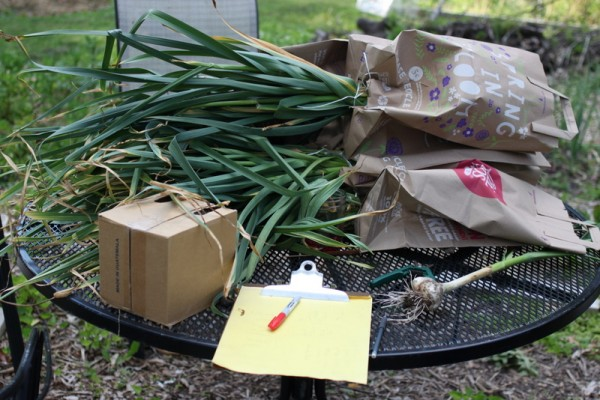 harvested garlic in paper bags