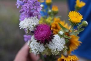 estes park wildflowers