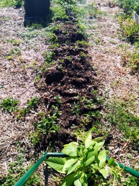 broadfork no-till garden bed