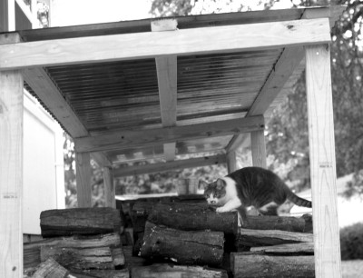 cat climbing on woodshed (2)
