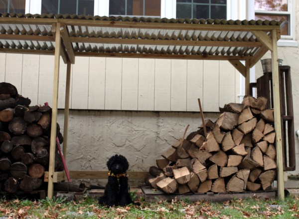 puppy with new woodshed