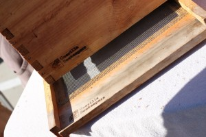 guerilla beekeepers