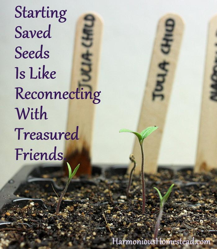 starting saved seeds