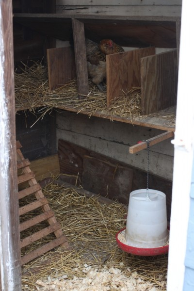 inside of shed coop