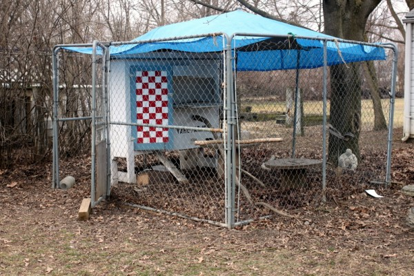 chicken coop in dog run