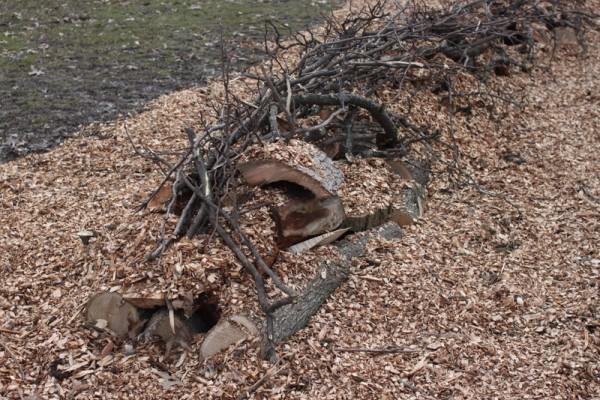 beginning of a hugelkultur pile