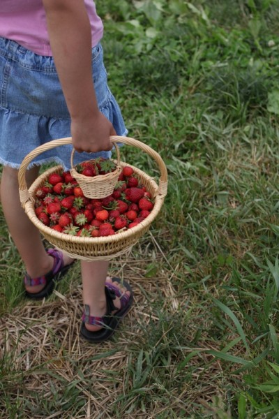 child carrying home basket of berries
