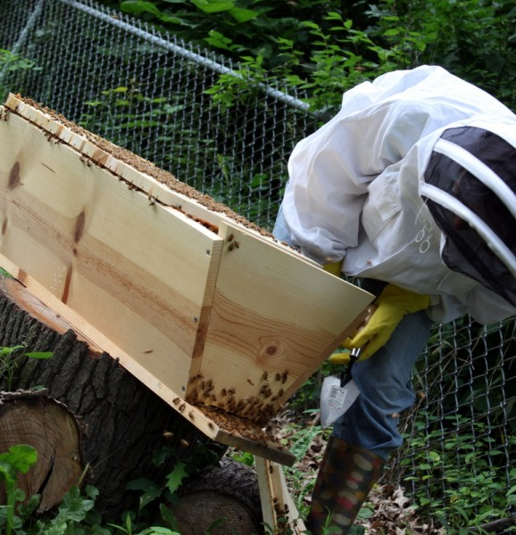beekeeper looking at washboarding