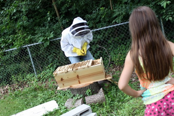 beekeeper showing girl hive
