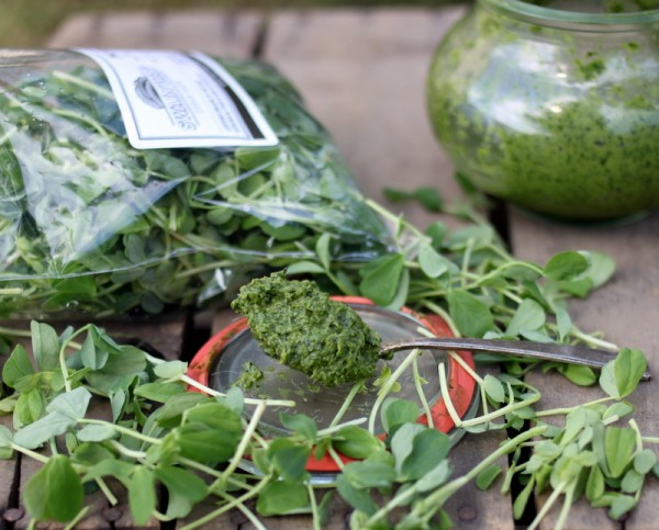 pea shoots in pesto recipe