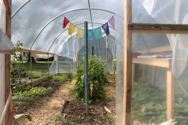 hoop house in autumn