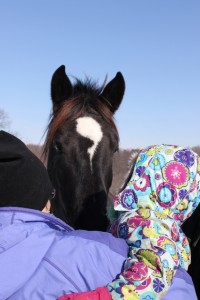 petting a percheron horse