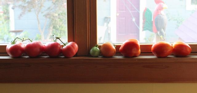 fresh tomatos on window sill