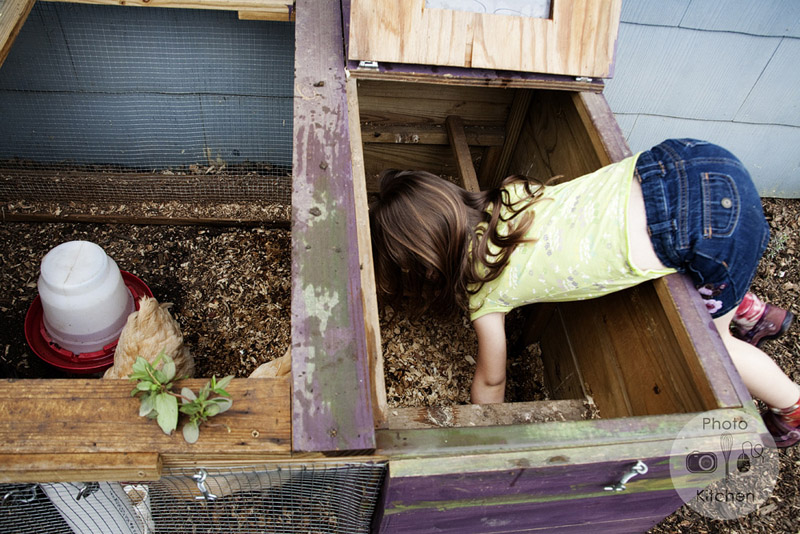 child collecting eggs in a backyard coop