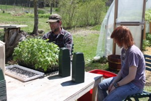repotting tomato seedlings at swainway