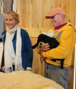 lambs at jorgensen farm